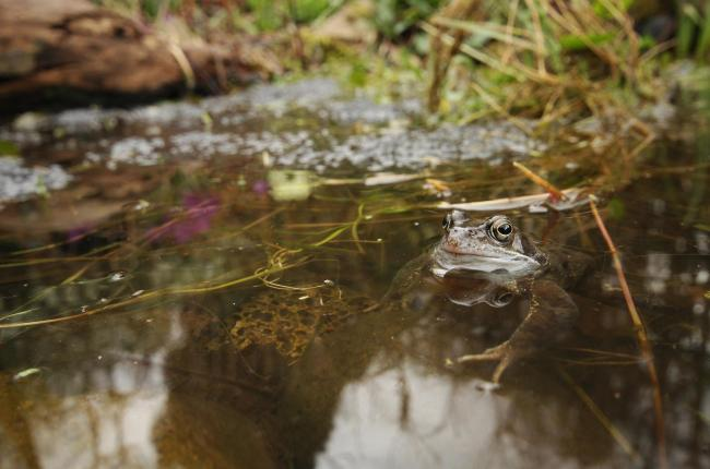 Clear benefit: A small pond made from a bucket or old sink will attract wildlife. Picture: Wildlife Trusts