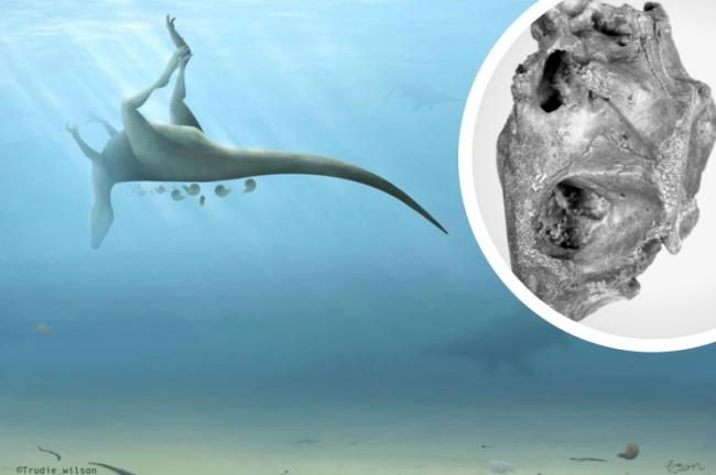 A new species of dinosaur has been discovered in the UK . Pictures: PA Wire/University of Southampton