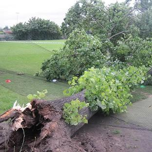 The scene at Spencer Cricket Club in Earlsfield, south west London where two boys were left with serious head injuries when the tree fell on