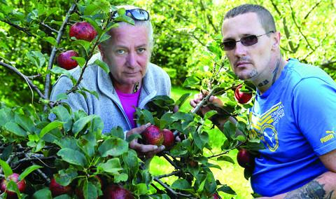 Banbury Cake: Jan Bailey, left, of the Elder Stubbs Heritage Orchard and Phil Milner, a member of the Restore Garden group, with some of the apples damaged by the weather