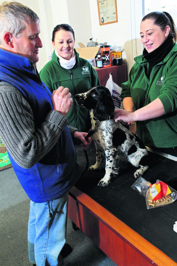Five-month-old springer spaniel Breeches gets ready to have a microchip fitted with, left to right, owner Simon Hadley, Lorna Jones and Dawn Long. Picture: OX56725 Ric Mellis