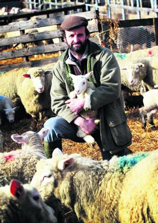 Shepherd David Barber at Warborough Farm, near Wantage, which has lost 300 lambs to Schmallenberg Disea