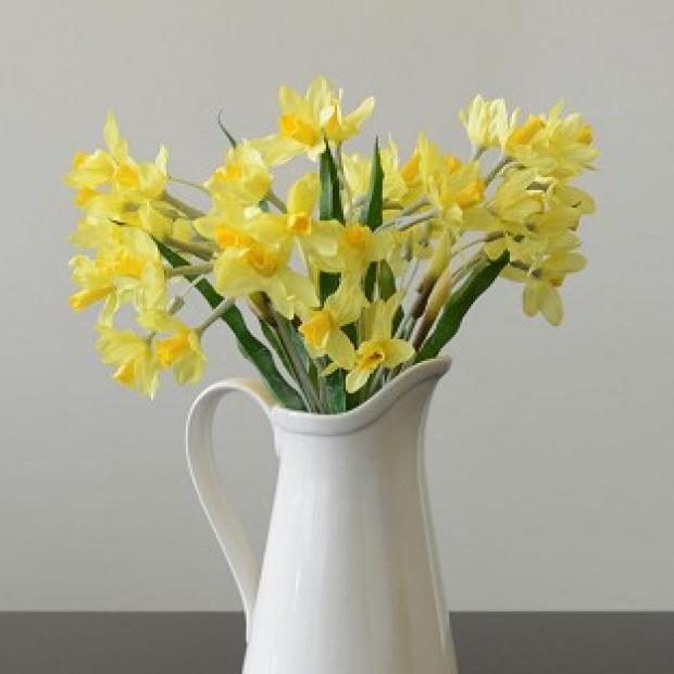 Banbury Cake: Fake daffodils are to be sold by John Lewis