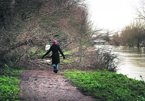 A fallen tree blocks the tow path of the Thames below Osney Lock towards