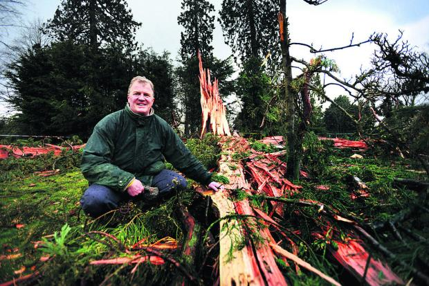 Banbury Cake: Nicholas Kaye with the tree that was destroyed by lighting