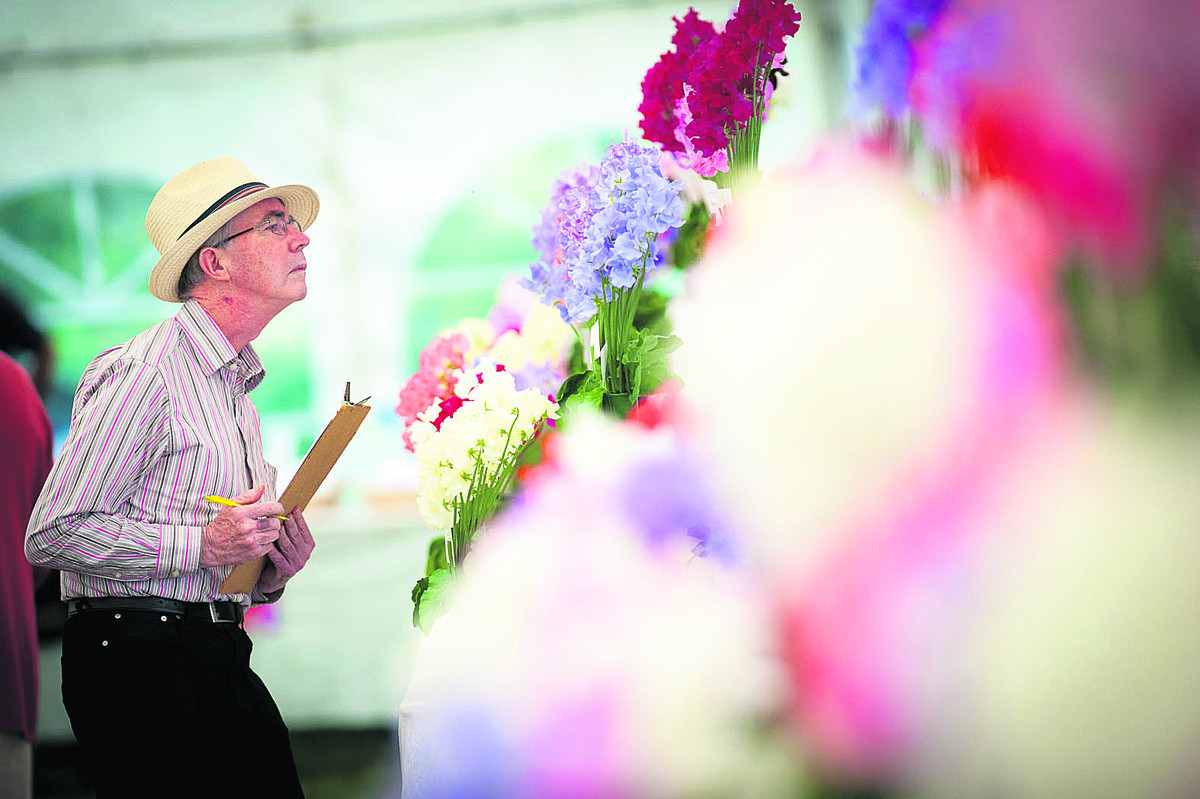 Philip O'Hara inspecting the collection at the National Sweet Pea Show at Millets Farm