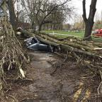 Banbury Cake: The scene after a tree brought down by strong winds crushed a car in Birmingham (PA/West Midlands Ambulance Service)