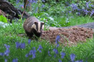 Wanted - wildlife lovers to take part in mammal counting survey