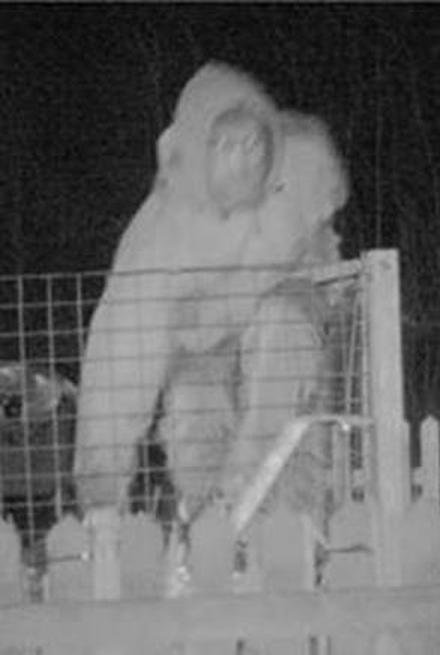 CCTV image released after lead stolen from primary school roof
