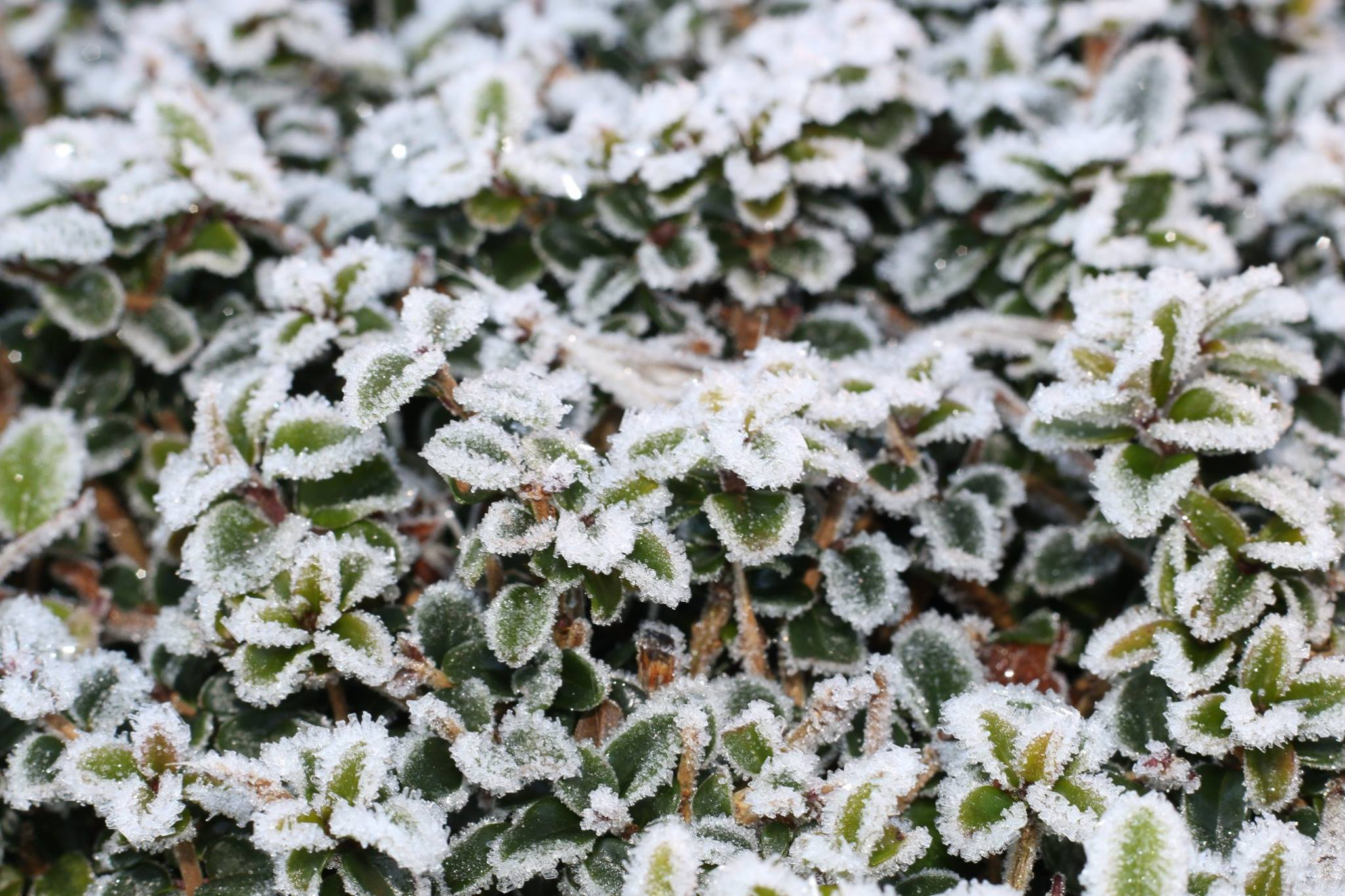 Frosty foliage photographed by Oxford Mail Camera Club member Paul Wakelin