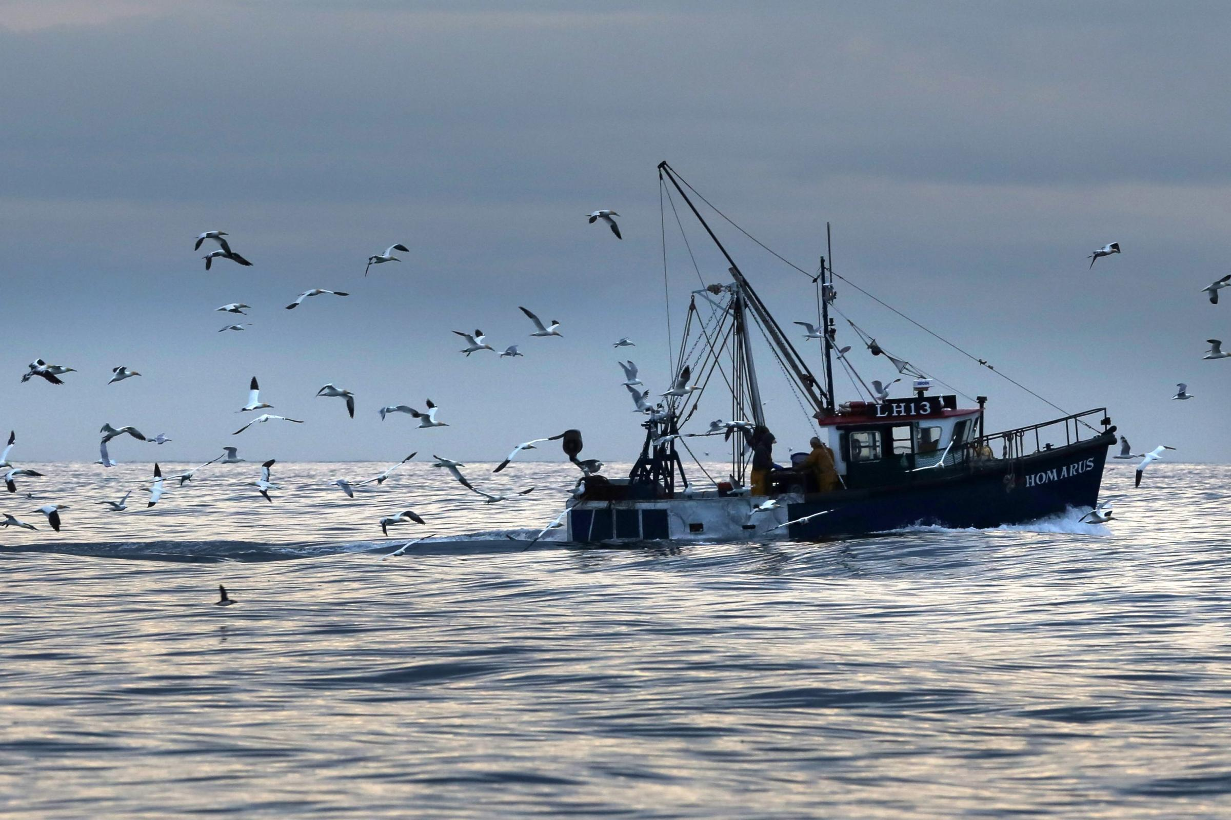 Joined-up approach needed for leaving the EU, says fishing organisation