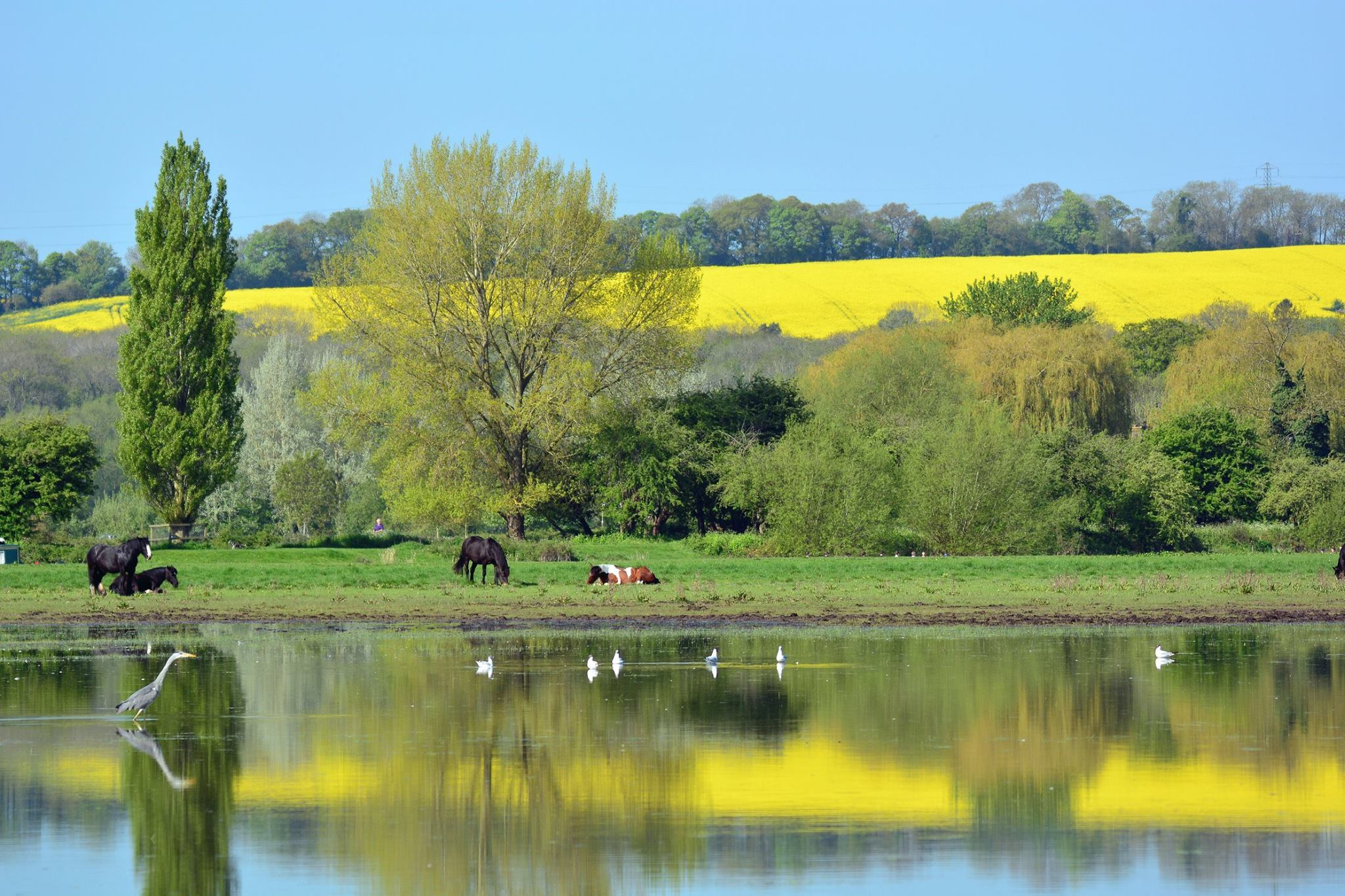 Springtime at Port Meadow by Tony Steele